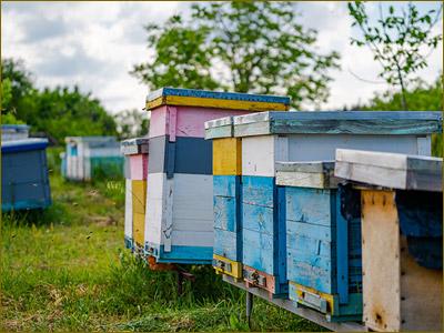 Beehive rentals